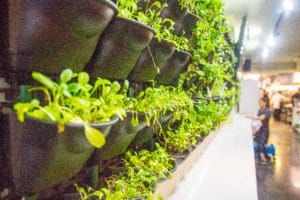 Live herbs line the walls of Greenhouse Bistro. (Photo: Jody Fellows)