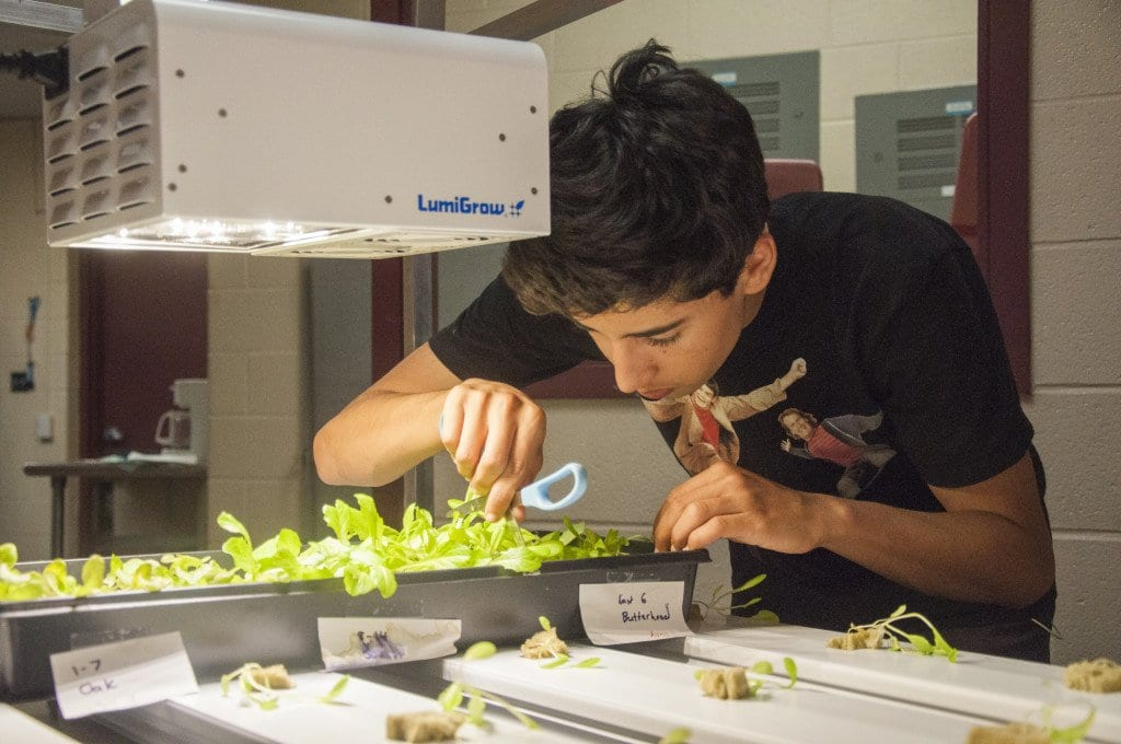 GEORGE MASON HIGH SCHOOL SOPHOMORE ADRIAN KAMEL cuts out a square of lettuce to place in Mason's hydroponic system as part of a couple of projects students are working on to provide food for the school's lunches. (Photo: News-Press/Drew Costley)