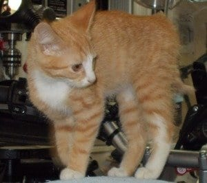 Sunny at about 5 months old. He went missing on Saturday, Nov. 29, at around 4 p.m.