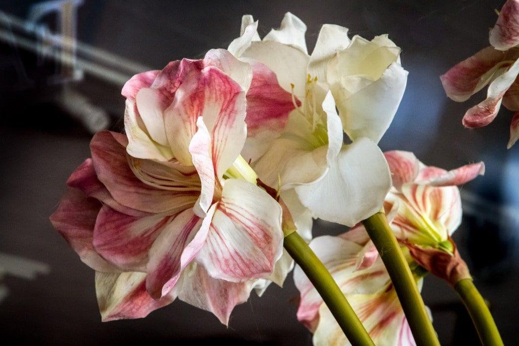 Best Florist